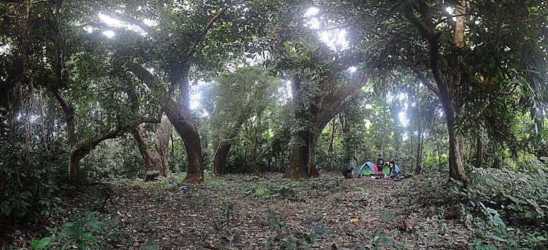 Wonosadi Sacred Forest - Gunungkidul